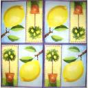 Лимон и лимоны в кадке
