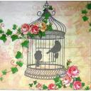 клетка с птичками и розы