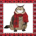 Кот в шарфе 25 х 25