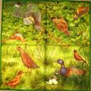 птицы на поляне