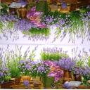 лаванда и цветы