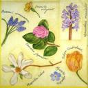 цветочный гербарий