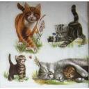 семья кошек