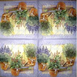 лаванда и пряные травы