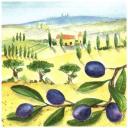 Пейзаж и ветка  маслин