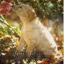 щенок с цветком. Ashdene