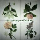 4 цветка