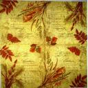 Осенние листья и текст