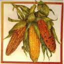 три кукурузки