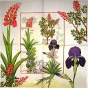 Ирис ботаника