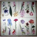 Дамы-цветы