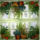 Пряные травы на окне