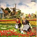 Тюльпаны Голландии.