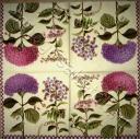 цветы и гортензия