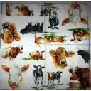 коровы, телята...