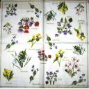 цветочки ботаника
