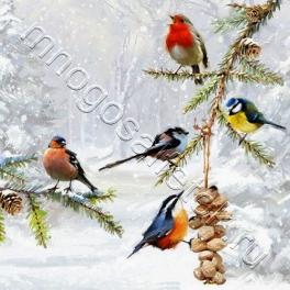 птички у кормушки