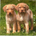 щенки в траве