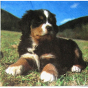 щенок на траве