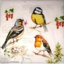 птички и смородинка