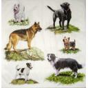 шесть собак