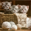 котята с клубочками