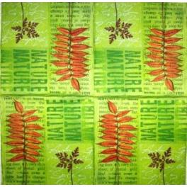 Листья, гербарий