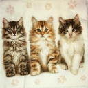 три котеночка