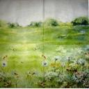 Пейзаж с ромашками. Мона СВАРД.
