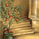 мандариновое деревце у лестницы