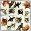 кошки и котята 21х21