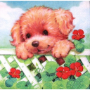 щенок и настурция