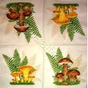 грибы и папоротник
