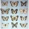 бабочки ч / б