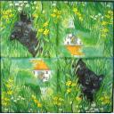Черный кот в траве