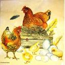 курочки и цыплятки
