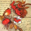 Снегирь и ягоды