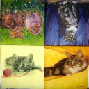 Четыре кота