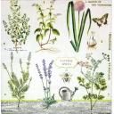 ботаника и лейка