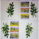 маслины и пейзажи