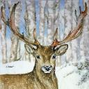 портрет оленя