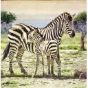 Зебры Сафари