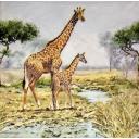 Жирафы Сафари
