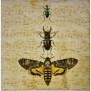 Жуки и ноты