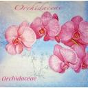 розовые орхидеи на голубом