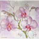 три розовых орхидеи