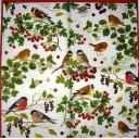 птички и ягодки. Каспари