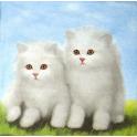 Два белых котенка