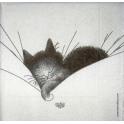 Кот в подушке