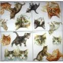 Кошечки и котята